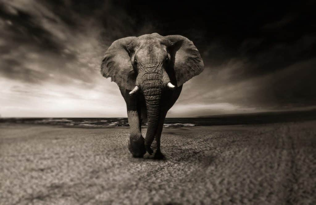 image of an elephant with the sea as background